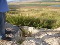 Tel Izr'ael 2014 24.JPG
