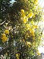 Temple Bell Tree YVSREDDY (4).jpg