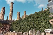 Temple of Apollo at Delphi from below with ivy.JPG