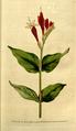The Botanical Magazine, Plate 80 (Volume 3, 1790).png