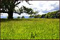 The Meadow. Applecross House. - panoramio.jpg