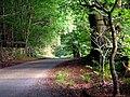 The Old Road Down Potterland Glen - geograph.org.uk - 1519524.jpg
