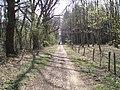 The Peddars Way, Tottington - geograph.org.uk - 395052.jpg