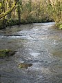 The River Lynher below Newbridge - geograph.org.uk - 1205454.jpg