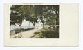 The Shell Road, Biloxi, Miss (NYPL b12647398-62277).tiff