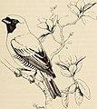 The birds of the Republic of Panama (1965) (19762376934).jpg