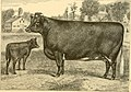 The breeds of live stock, and the principles of heredity (1887) (14758248196).jpg
