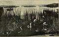 The children's city (1910) (14579212260).jpg