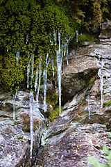 The icicles (2).jpg