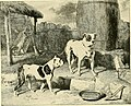 The new book of the dog - a comprehensive natural history of British dogs and their foreign relatives, with chapters on law, breeding, kennel management, and veterinary treatment (1911) (14577154737).jpg