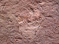 Theropod dinosaur footprint in sandstone (Kayenta Formation or Navajo Sandstone, Lower Jurassic; Potash-Poison Spider dinosaur tracksite, Williams Bottom, west of Moab, Utah, USA) 37 (33192120145).jpg