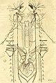 Thomae Willis Opera omnia, nitidius quàm vnquam hactenus edita, plurimùm emendata, indice rerum copiosissimo, ac distinctione characterum exornata (1694) (14779959684).jpg