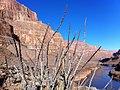 Thorny Cactus (24845515).jpeg