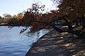 Tidal basin.jpg