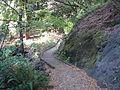 Tilden botanical garden 10.JPG