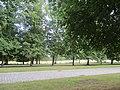 Tilleuls Versailles.jpg