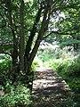 To Heckingham on the Wherryman's Way - geograph.org.uk - 1493091.jpg