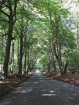 Little Gaddesden - Toll Road through Ashridge