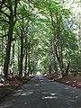 Toll Road through Ashridge - geograph.org.uk - 243214.jpg