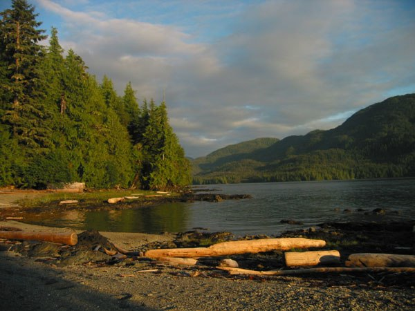 TongassForest1
