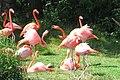 Toronto Zoo IMG 1095 (194431566).jpg
