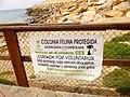 Torrevieja - Colonia felina protegida 1.jpg