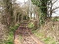 Track,The Witsetts. - geograph.org.uk - 146687.jpg