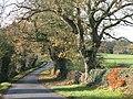 Track, farmland and woodland near Healey Hall - geograph.org.uk - 1094129.jpg