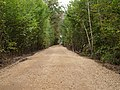 Track in the Hambach forest 03.jpg