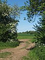 Track through gap between hedge and trees near Akenham - geograph.org.uk - 796993.jpg
