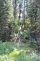 Trail to the Awesome Takakkaw Falls IMG 4691.JPG