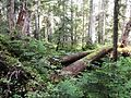 Travel through the woods - Flickr - brewbooks.jpg