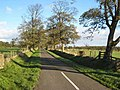 Tree-lined road near Capheaton - geograph.org.uk - 271507.jpg