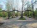 Tree avenue of London Plane in Hajd park, Belgrade.jpg