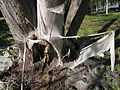 Tree covered by net4.jpg