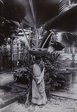 Garden of Palms - Image: Tropenmuseum Royal Tropical Institute Objectnumber 60006332 Portret van een Hindoestaanse maverko