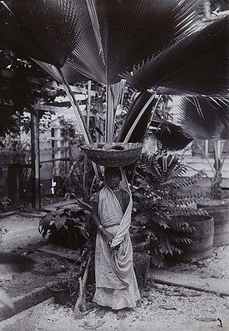 Garden of Palms - Image: Tropenmuseum Royal Tropical Institute Objectnumber 60006332 Portret van een Hindoestaanse maverko
