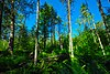 Trout Lake Conifer Swamp.jpg