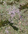 Tula Urban Agglomeration, Russia, Landsat-7 image.jpg