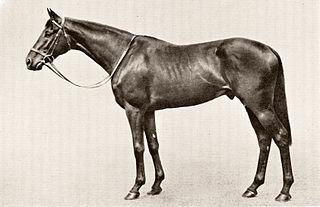 Tulyar Irish-bred Thoroughbred racehorse