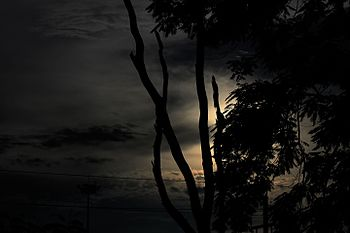 Twilight of the hour.jpg