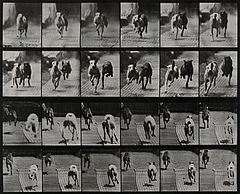 Two dogs racing. Photogravure after Eadweard Muybridge, 1887 Wellcome V0048769.jpg