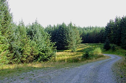 Tywi Forest, Wales Tywi Forest road, Ceredigion - geograph.org.uk - 1510647.jpg