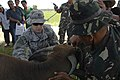 US Navy 080602-N-8878B-112 Army Capt. Rose Grimm, along with Armed Forces of the Philippines Master Sgt. Ruben Bas-Awan, injects a Water Buffalo with a vaccination.jpg