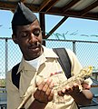 US Navy 100427-N-2074H-308 Electrician's Mate Fireman Juran Foster, assigned to the multi-purpose amphibious assault ship USS Iwo Jima (LHD 7), holds a lizard at Everglades Holiday Park during Fleet Week Port Everglades.jpg