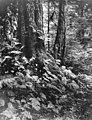 Unidentified forested area around Sitka, Alaska, circa 1915 (AL+CA 7343).jpg