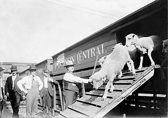Stock car (rail) - Sheep are unloaded from the upper level of a Wisconsin Central stock car in Chicago, Illinois in 1904