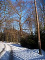 Významný strom Domoušice - Rovina.jpg
