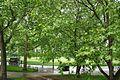 VIEW , ®'s - DigiGraf - Ð - ┼ , GREAT LONDON ASHBURTON VISTAS - panoramio (9).jpg