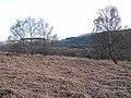 Valley of the Holystone Burn - geograph.org.uk - 1264320.jpg